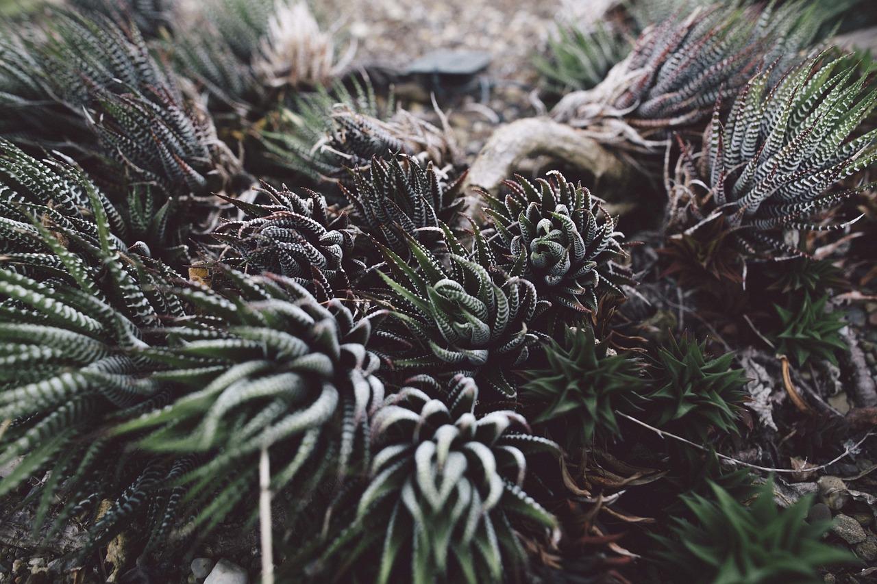 succulent-984106_1280