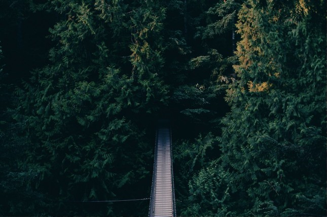 foot-bridge-918476_1280