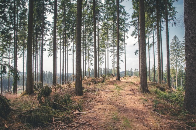 forest-1568808_1280